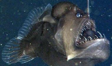 better scourge fishy.jpg