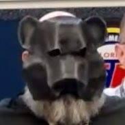 bigbanjobear