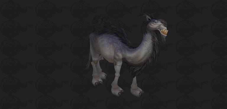 camel pet.jpg